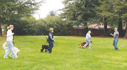 Mission City Dog Training