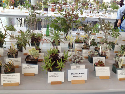 Mission College Hosts Wildflower Show