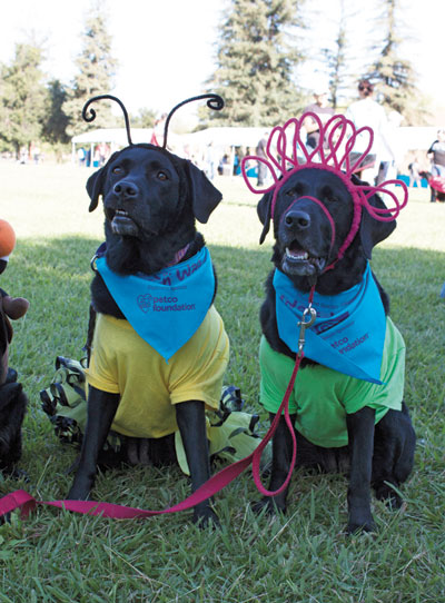 Walk 'n Wag Raises Funds for HSSV