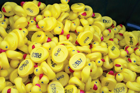 Ducks Race to Support Girl Scouts