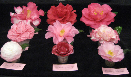 Prima Donnas of the 74th Annual Camellia Show