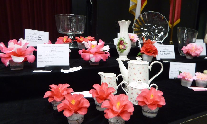 The Camellia Society, 78th Annual Pageant of Camellia Beauties Wows Valley Visitors, the 78th Camellia Flower Show and Plant Sale, Headen Inman House
