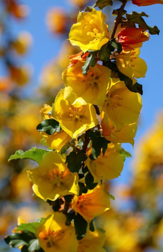 Photos Of The Week Jiaren Yoga Spring Flowers Beautiful