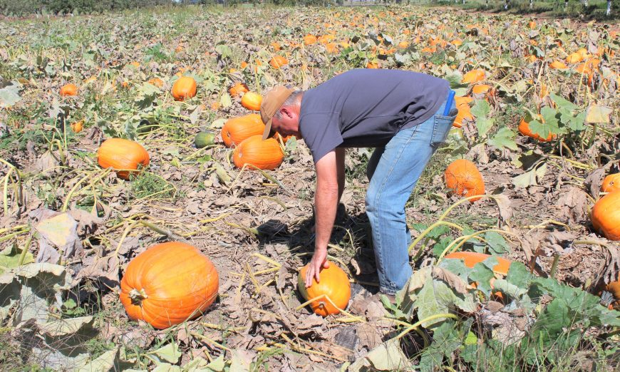 The Nutrition Services Food Showcase is coming this week to The SCUSD Farm. Guests will see a pumpkin patch and tomatoes that benefit SCUSD students.