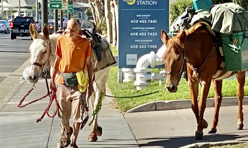The 3 Mules recently passed through Santa Clara on their way to San Diego. The man named Mule is living a nomadic life with his animals.