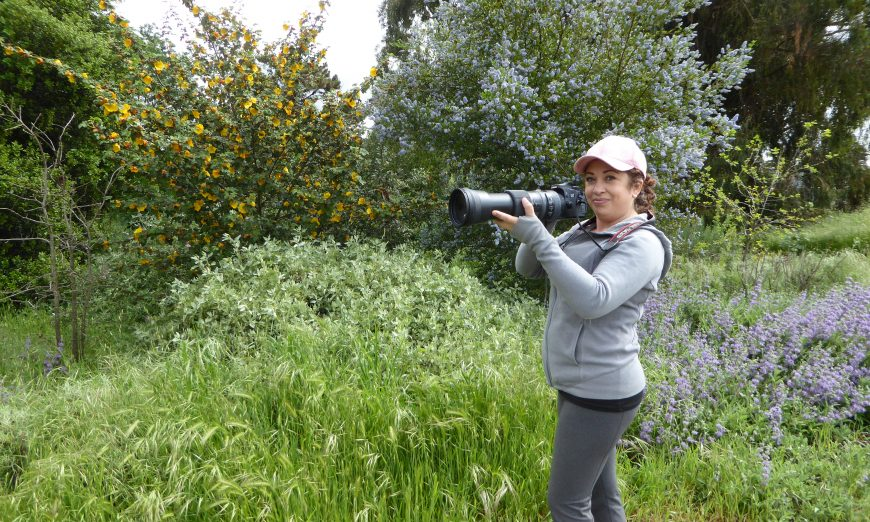 Erica Fleniken is a volunteer as well as the nature and wildlife photographer at Ulistac Natural Area in Santa Clara. She loves bird photography.
